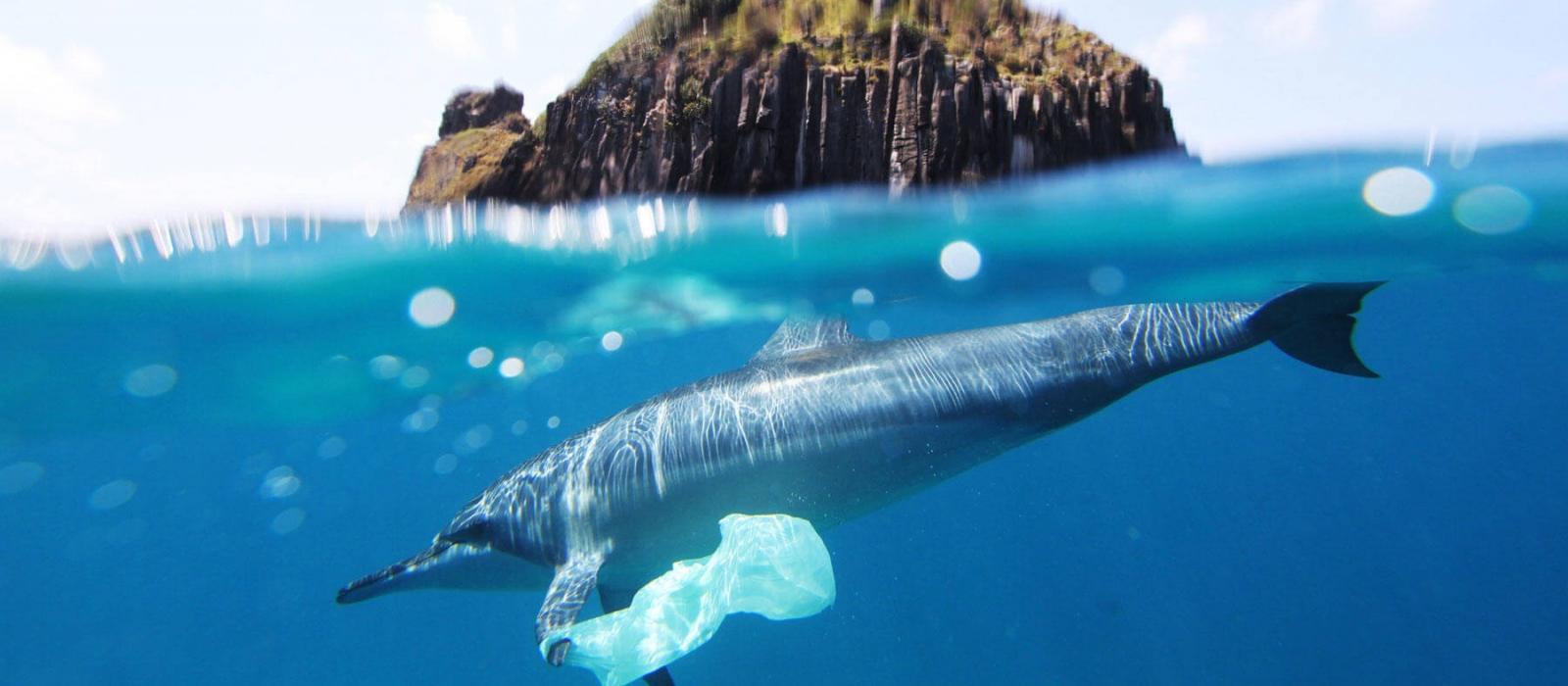 Ocean Preservation cause image